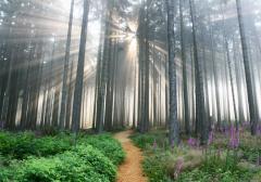 shamans forest