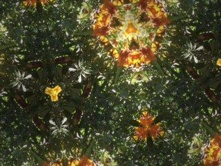 20150427 ecotherapy merrylands 3